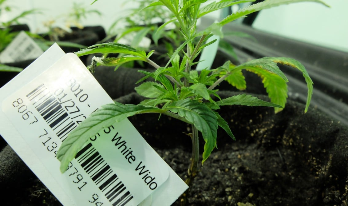 tracking cannabis